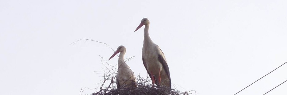 Photo Essay:  Latvians Love Storks