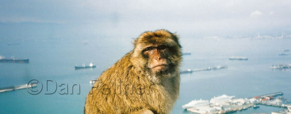 Photo Essay:  The Barbary Apes of Gibraltar